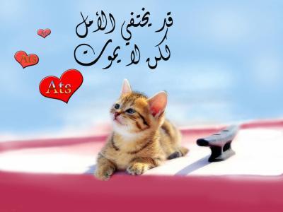 because Iam stupid اهداء لمن احببته ومازلت احبه 1659191022_small